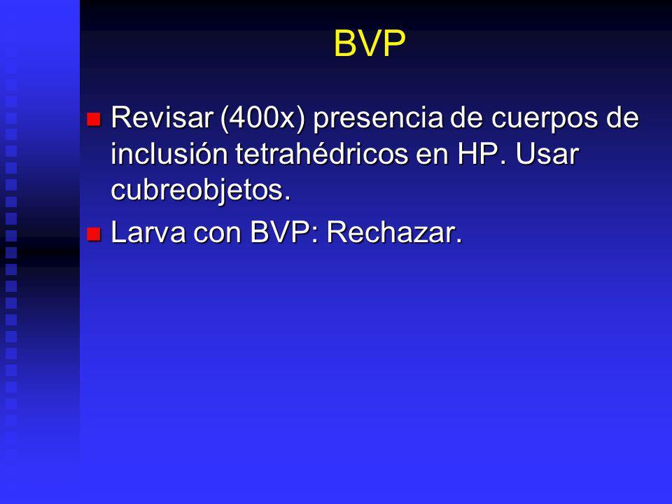 BVP Revisar (400x) presencia de cuerpos de inclusión tetrahédricos en HP.