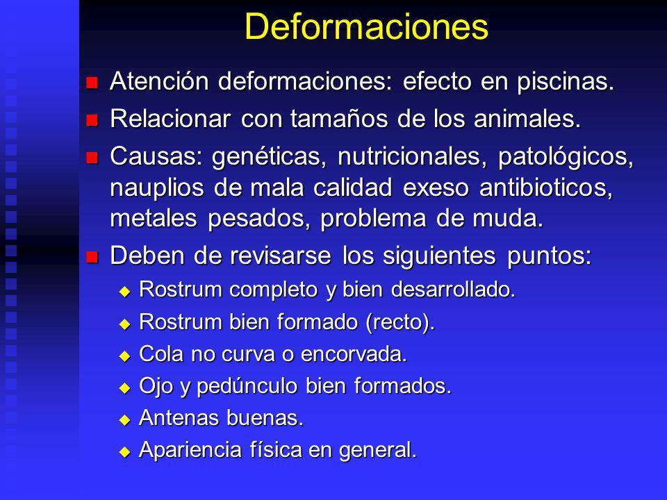 Deformaciones Atención deformaciones: efecto en piscinas.
