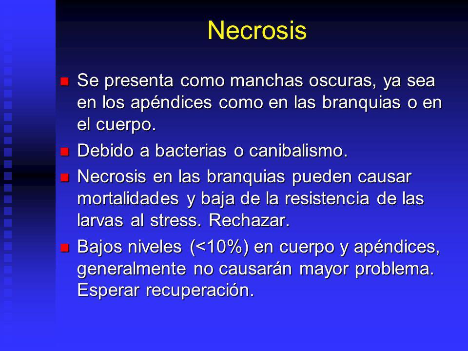 Necrosis Se presenta como manchas oscuras, ya sea en los apéndices como en las branquias o en el cuerpo.