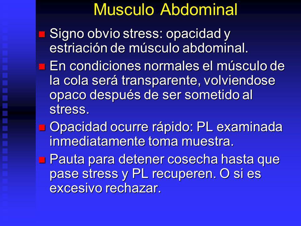 Musculo Abdominal Signo obvio stress: opacidad y estriación de músculo abdominal.