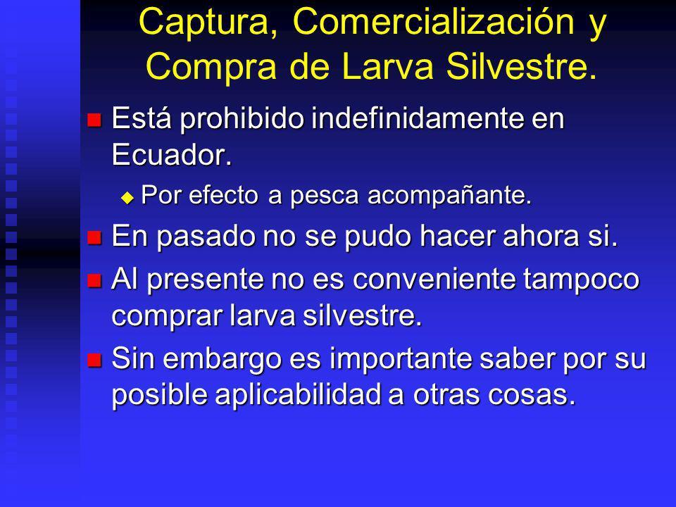 Captura, Comercialización y Compra de Larva Silvestre.