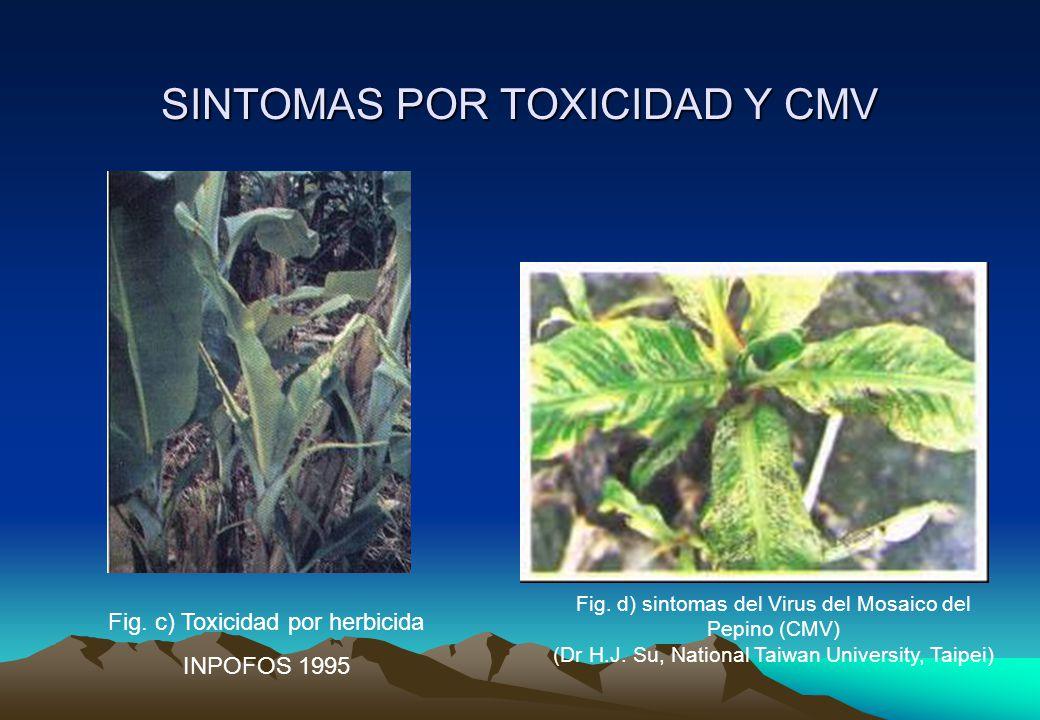 SINTOMAS POR TOXICIDAD Y CMV