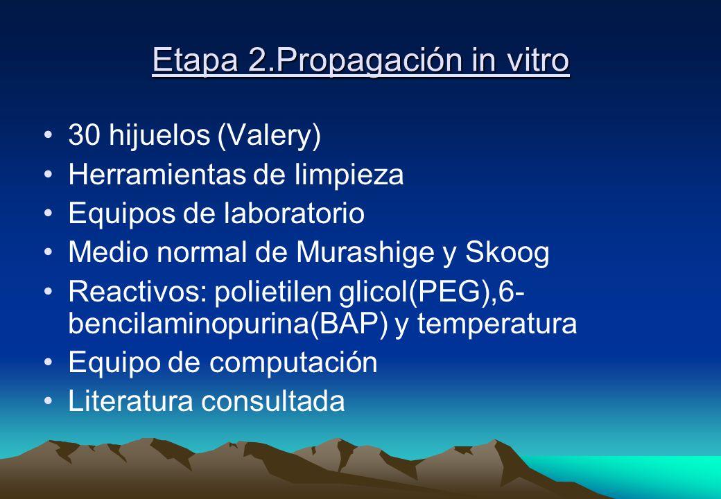 Etapa 2.Propagación in vitro