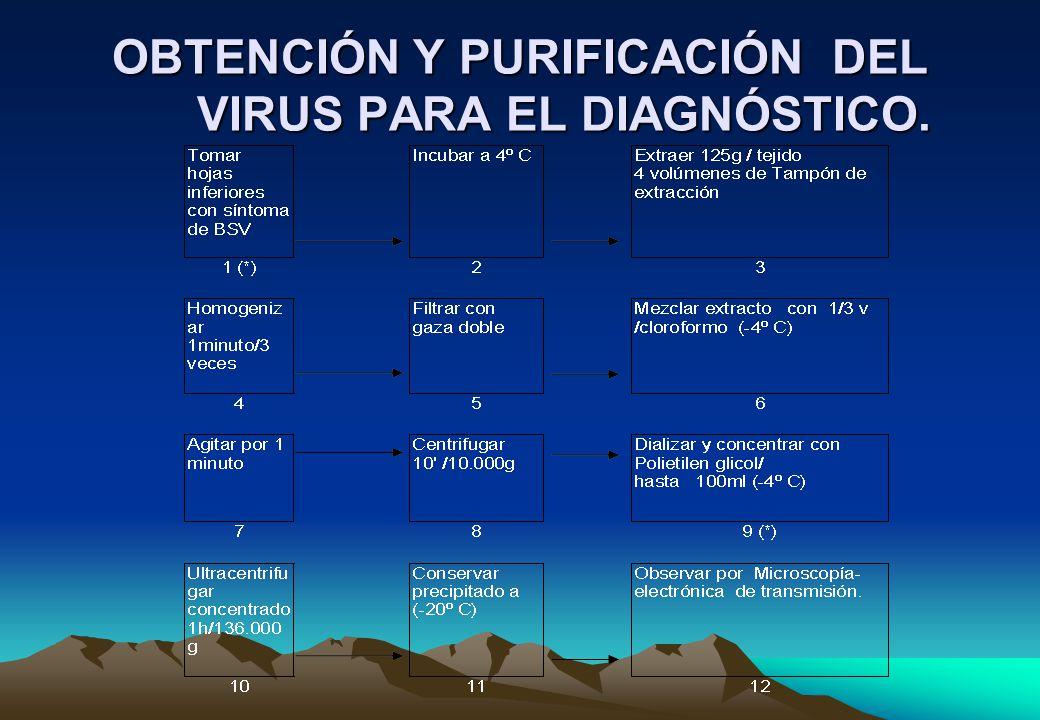 OBTENCIÓN Y PURIFICACIÓN DEL VIRUS PARA EL DIAGNÓSTICO.