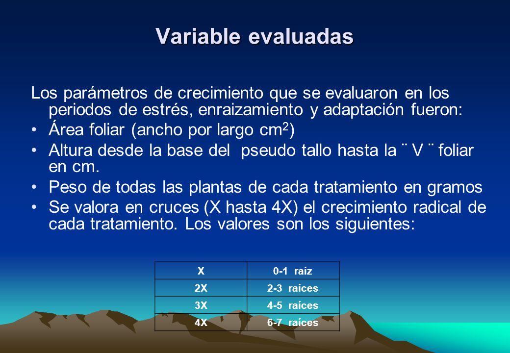 Variable evaluadas Los parámetros de crecimiento que se evaluaron en los periodos de estrés, enraizamiento y adaptación fueron: