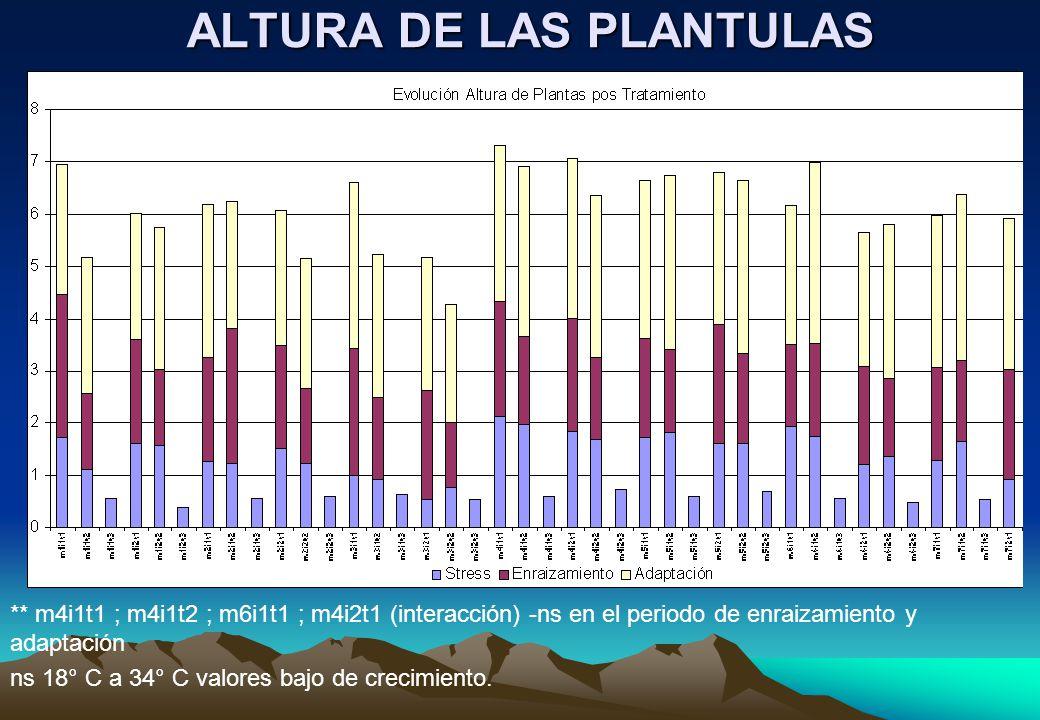 ALTURA DE LAS PLANTULAS