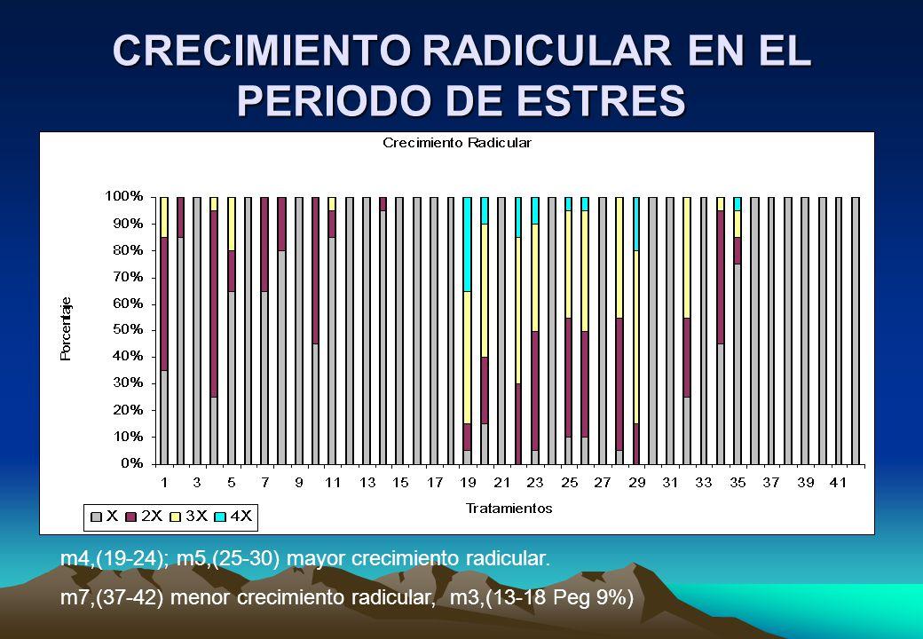 CRECIMIENTO RADICULAR EN EL PERIODO DE ESTRES