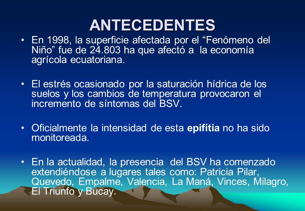 ANTECEDENTES En 1998, la superficie afectada por el Fenómeno del Niño fue de 24.803 ha que afectó a la economía agrícola ecuatoriana.