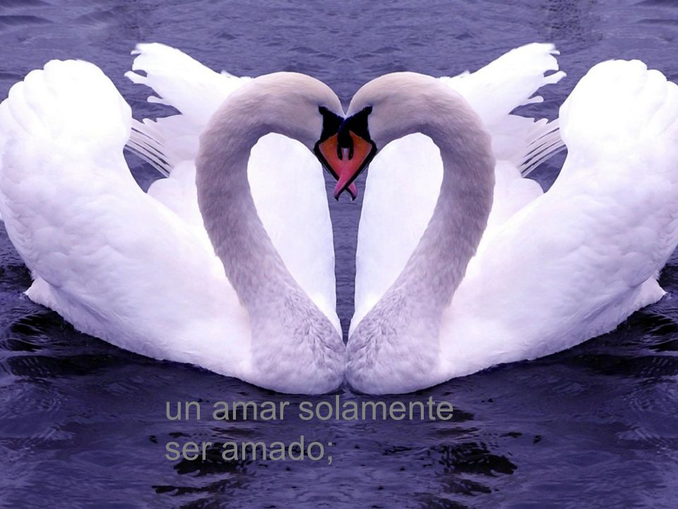 un amar solamente ser amado;