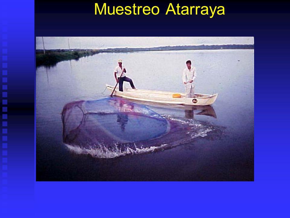 Muestreo Atarraya