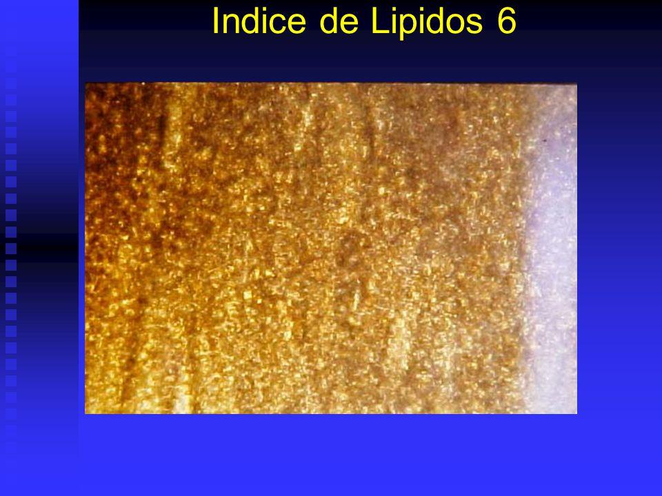 Indice de Lipidos 6