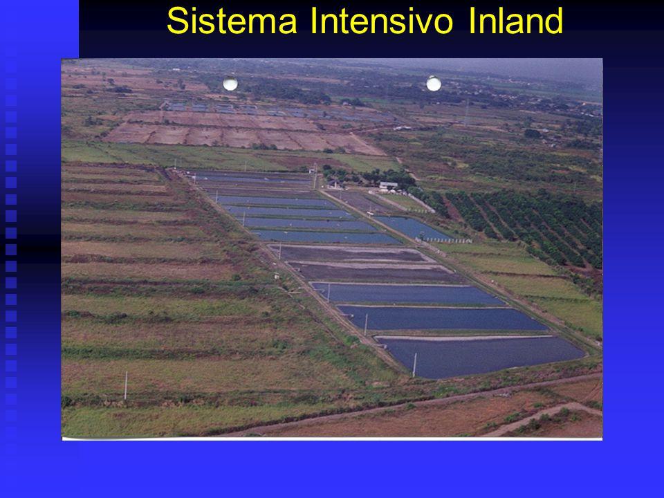 Sistema Intensivo Inland