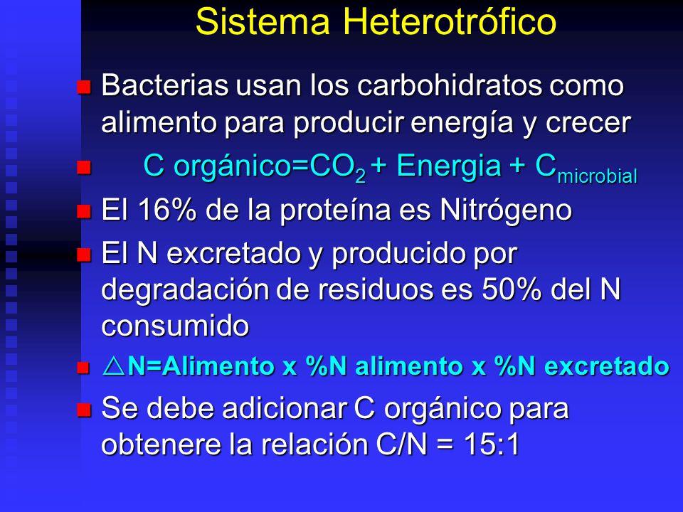 Sistema Heterotrófico