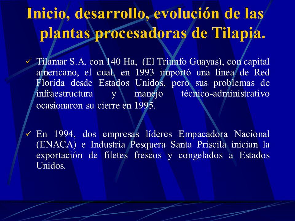 Inicio, desarrollo, evolución de las plantas procesadoras de Tilapia.