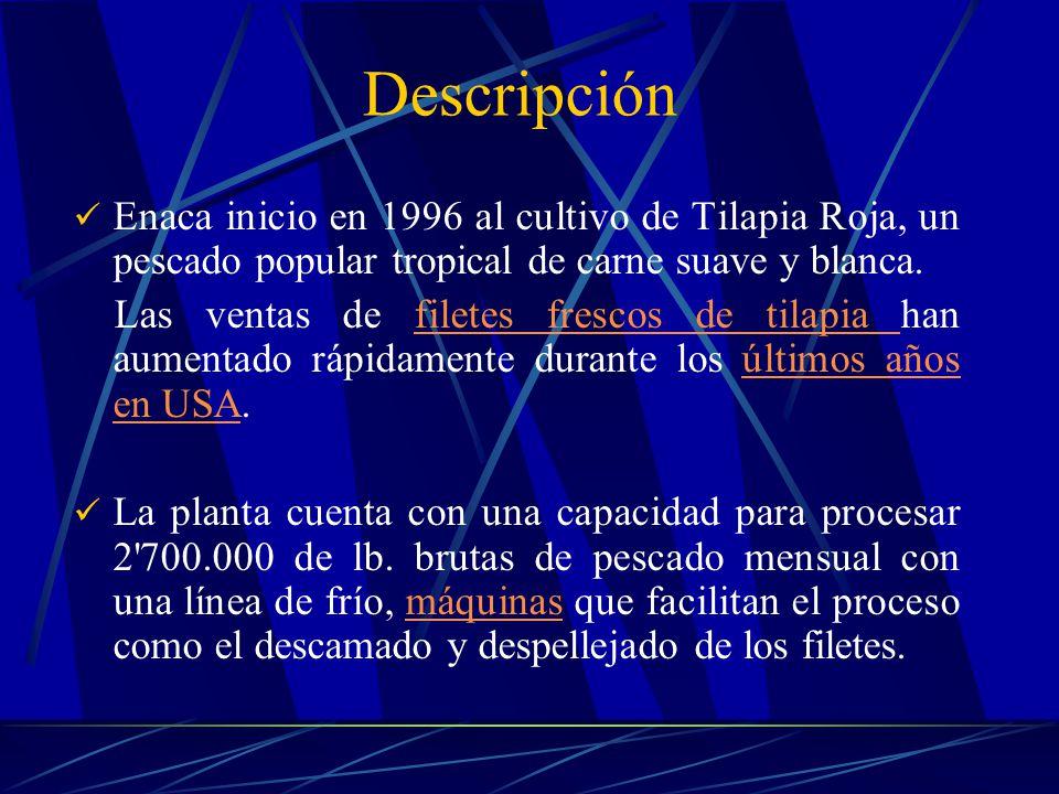 Descripción Enaca inicio en 1996 al cultivo de Tilapia Roja, un pescado popular tropical de carne suave y blanca.