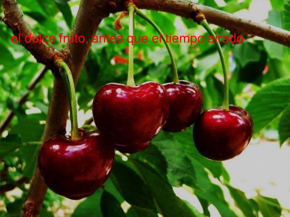 el dulce fruto, antes que el tiempo airado