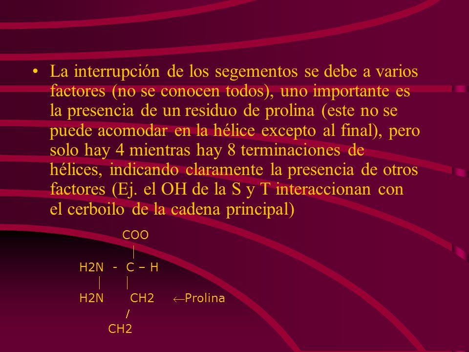 La interrupción de los segementos se debe a varios factores (no se conocen todos), uno importante es la presencia de un residuo de prolina (este no se puede acomodar en la hélice excepto al final), pero solo hay 4 mientras hay 8 terminaciones de hélices, indicando claramente la presencia de otros factores (Ej. el OH de la S y T interaccionan con el cerboilo de la cadena principal)