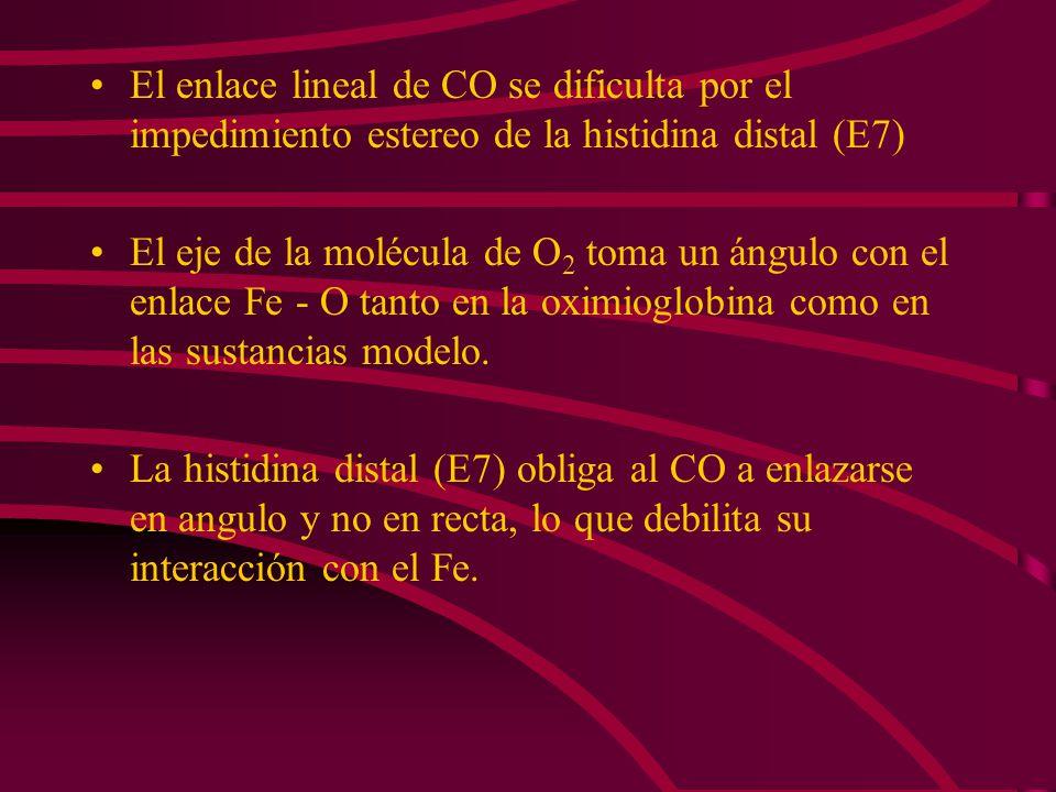 El enlace lineal de CO se dificulta por el impedimiento estereo de la histidina distal (E7)