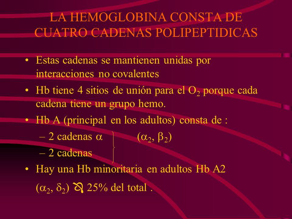 LA HEMOGLOBINA CONSTA DE CUATRO CADENAS POLIPEPTIDICAS