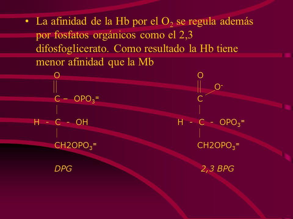 La afinidad de la Hb por el O2 se regula además por fosfatos orgánicos como el 2,3 difosfoglicerato. Como resultado la Hb tiene menor afinidad que la Mb