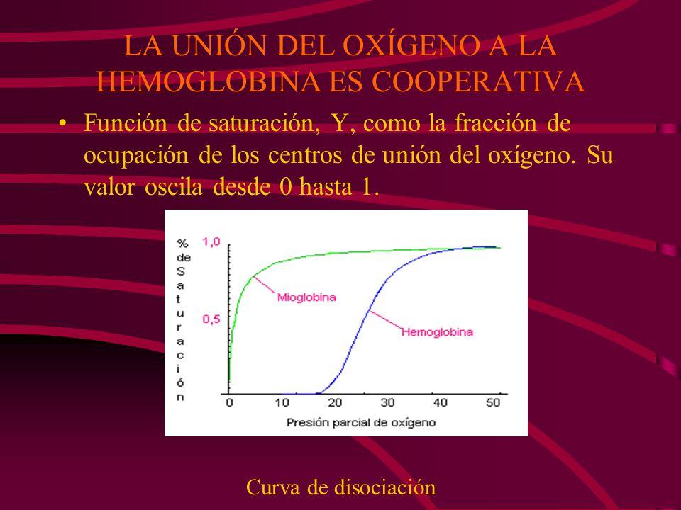 LA UNIÓN DEL OXÍGENO A LA HEMOGLOBINA ES COOPERATIVA