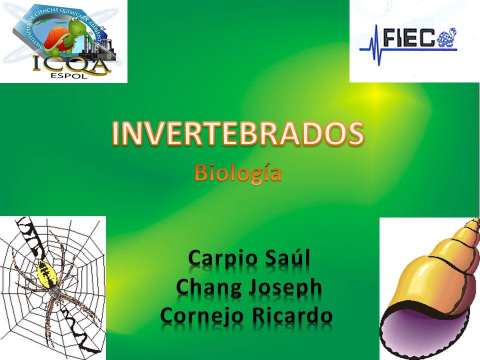 INVERTEBRADOS Biología Carpio Saúl Chang Joseph Cornejo Ricardo