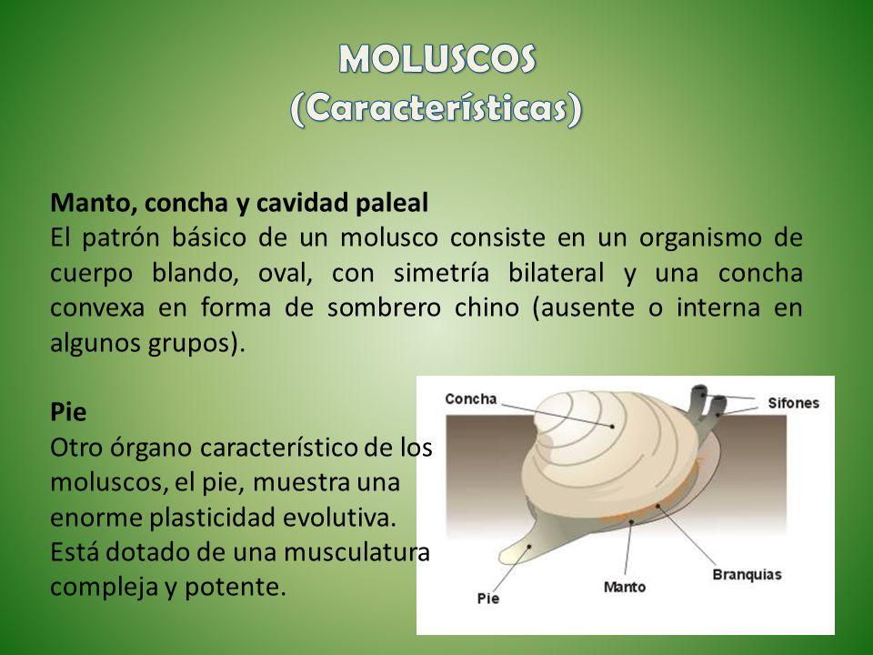 MOLUSCOS (Características)