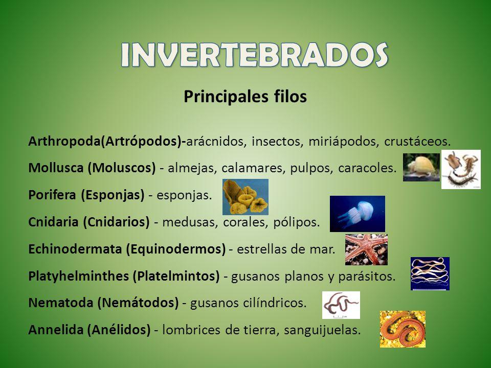 INVERTEBRADOS Principales filos