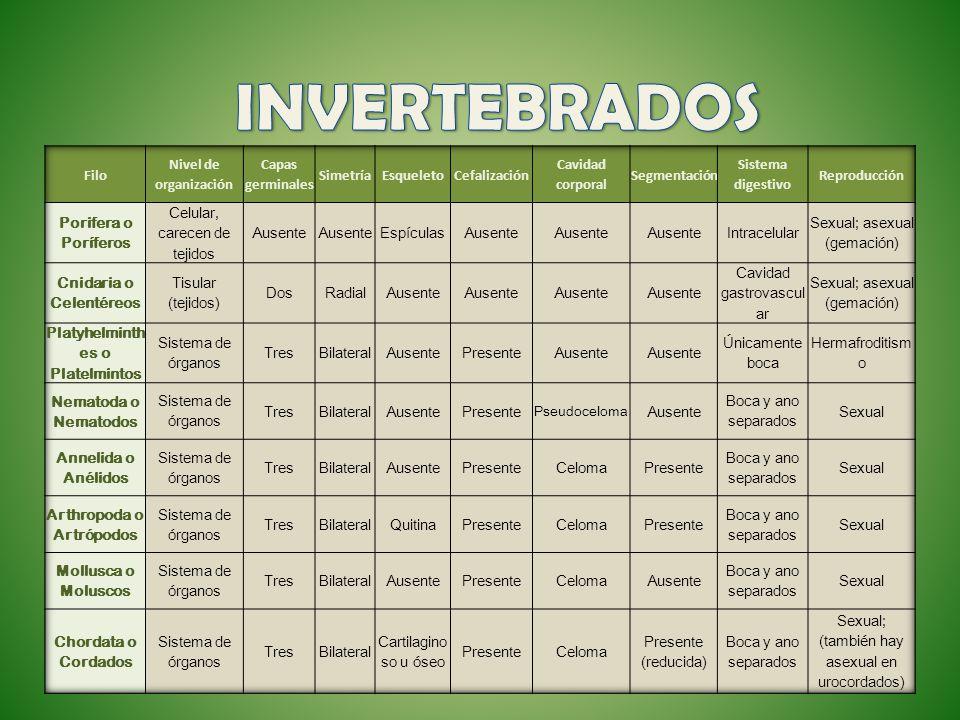 INVERTEBRADOS Filo Nivel de organización Capas germinales Simetría