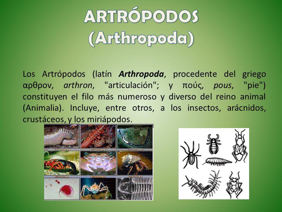 ARTRÓPODOS (Arthropoda)