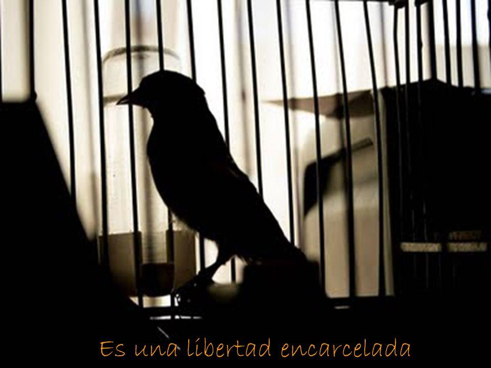 Es una libertad encarcelada