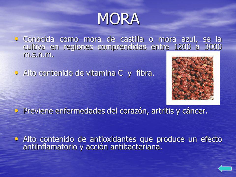 MORA Conocida como mora de castilla o mora azul, se la cultiva en regiones comprendidas entre 1200 a 3000 m.s.n.m.