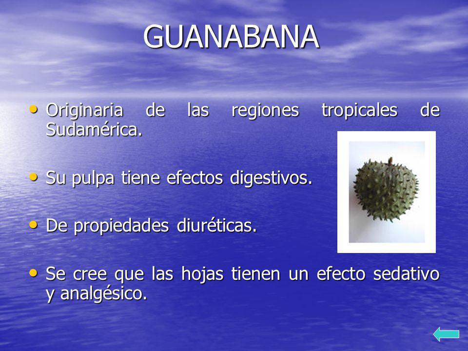 GUANABANA Originaria de las regiones tropicales de Sudamérica.