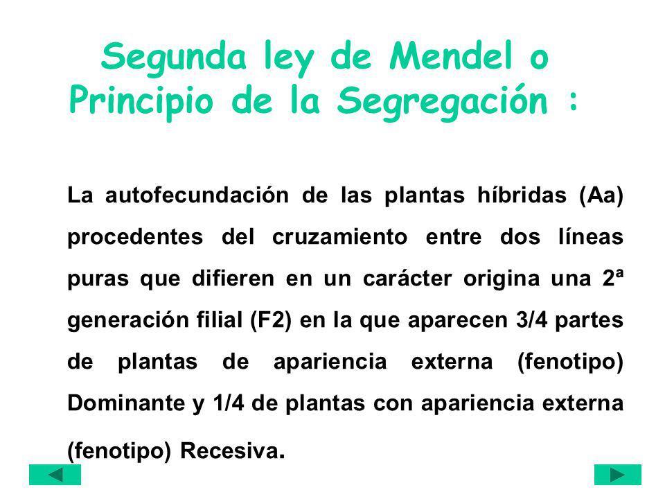 Segunda ley de Mendel o Principio de la Segregación :