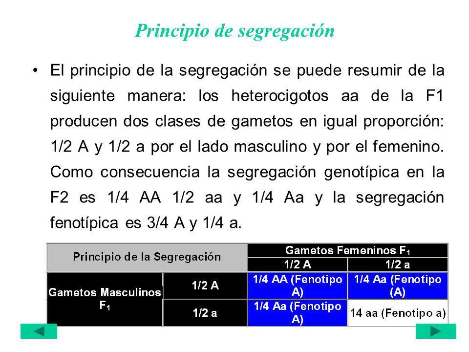 Principio de segregación