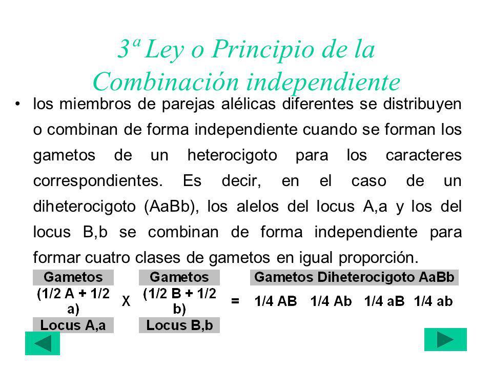 3ª Ley o Principio de la Combinación independiente