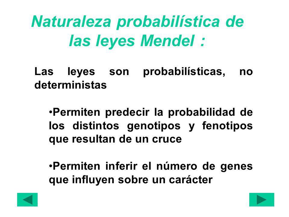 Naturaleza probabilística de las leyes Mendel :