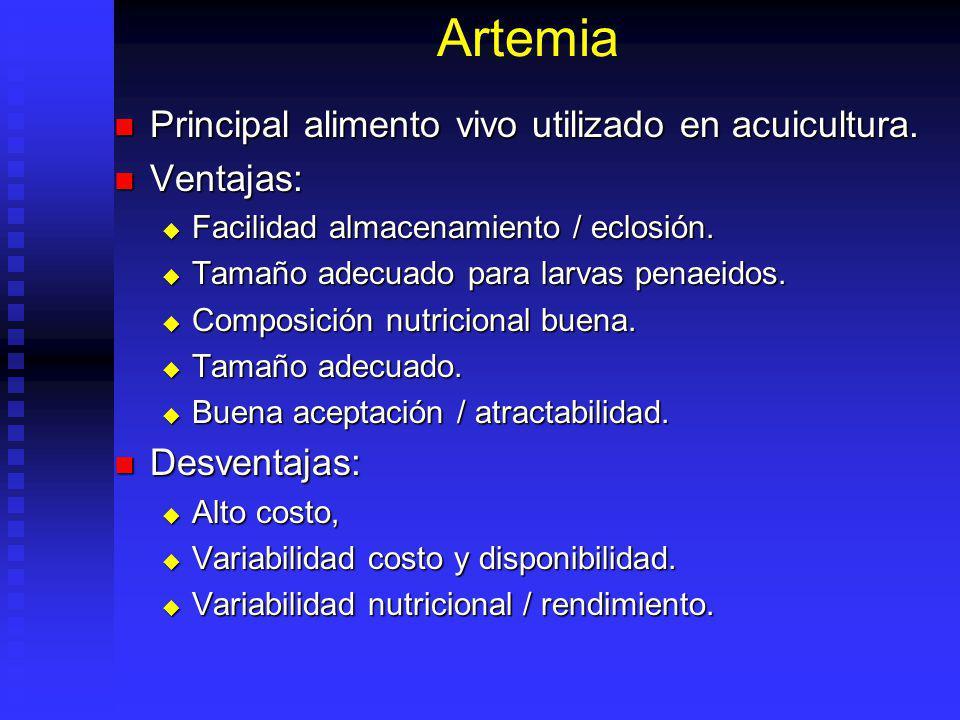 Artemia Principal alimento vivo utilizado en acuicultura. Ventajas: