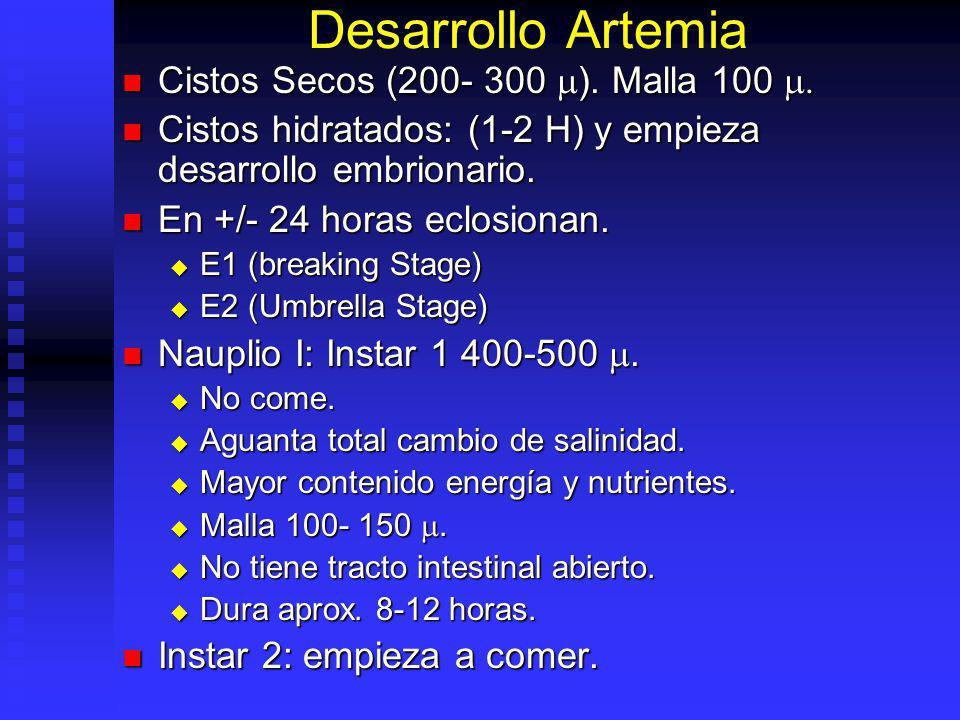 Desarrollo Artemia Cistos Secos (200- 300 m). Malla 100 m.