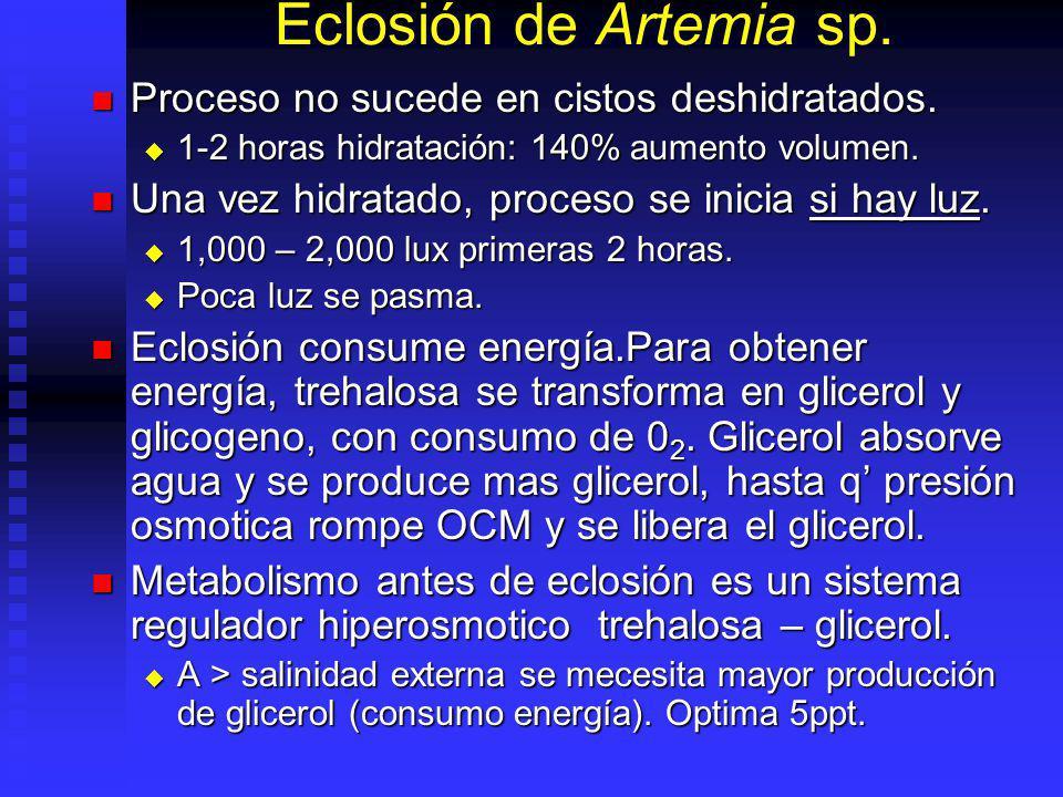 Eclosión de Artemia sp. Proceso no sucede en cistos deshidratados.