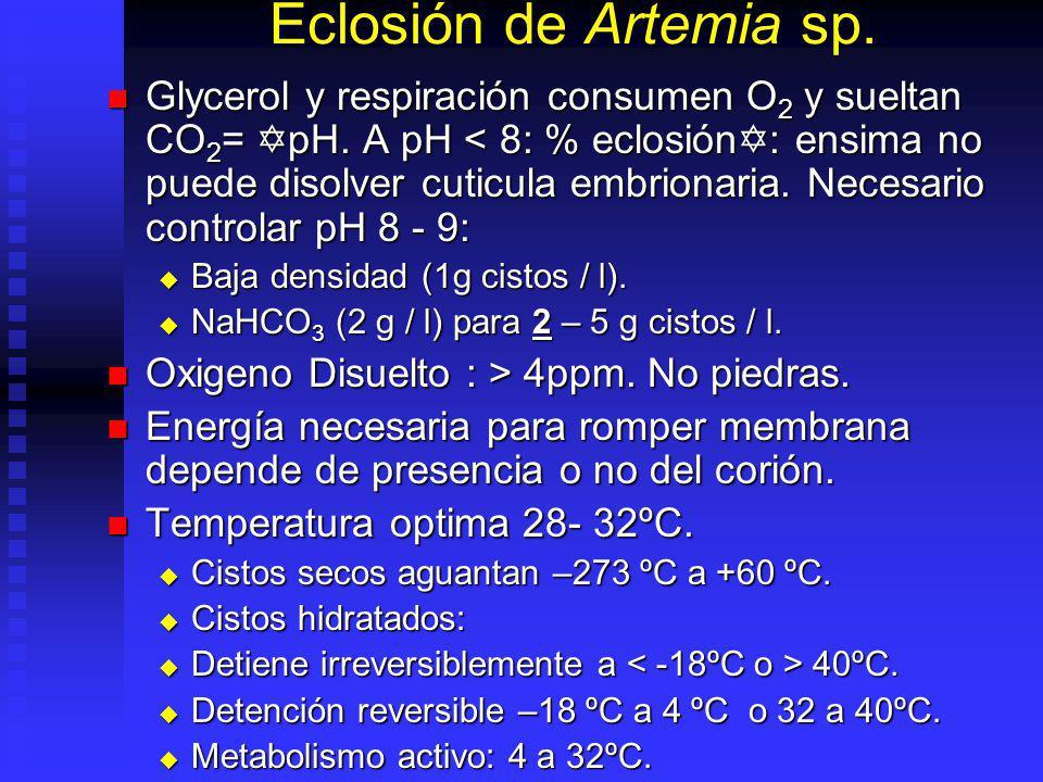 Eclosión de Artemia sp.