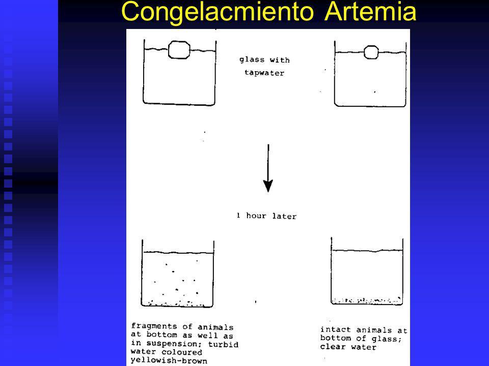 Congelacmiento Artemia
