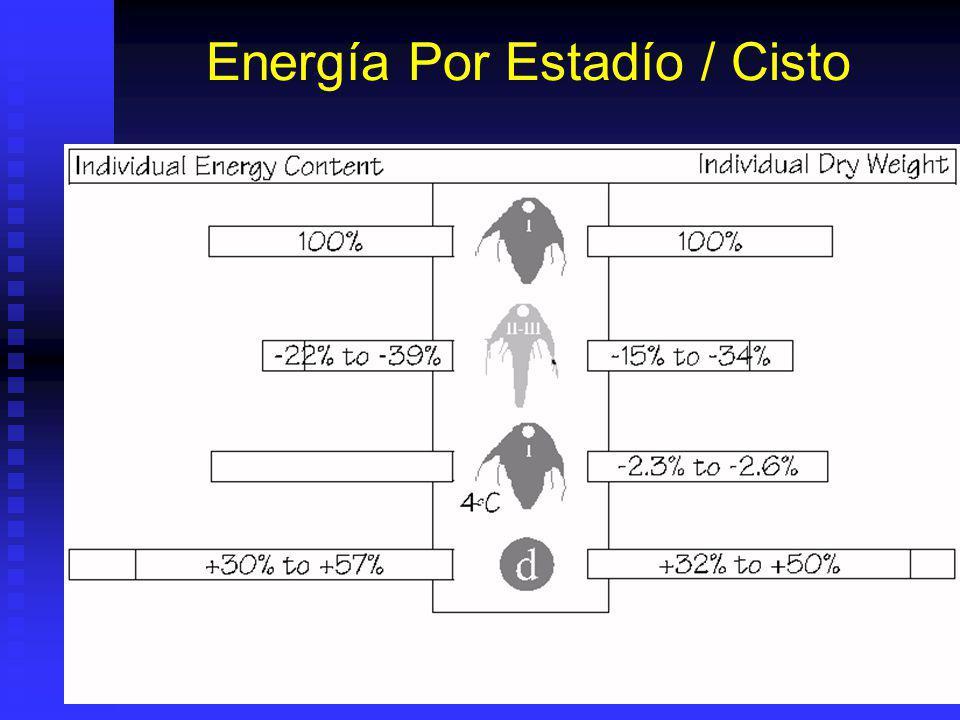 Energía Por Estadío / Cisto