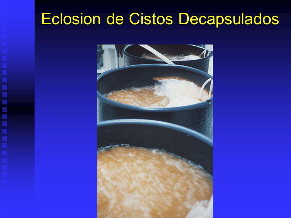 Eclosion de Cistos Decapsulados