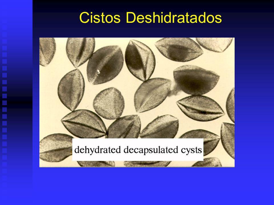 Cistos Deshidratados