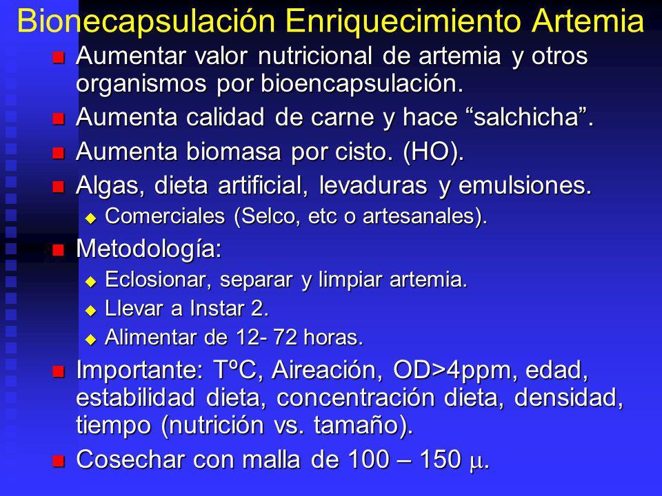 Bionecapsulación Enriquecimiento Artemia