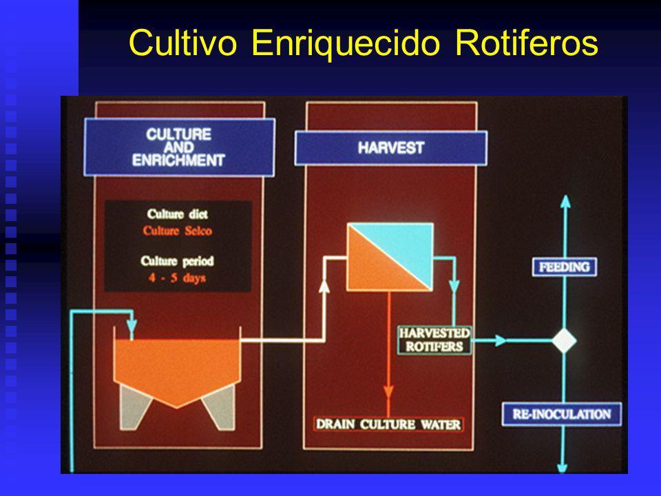 Cultivo Enriquecido Rotiferos