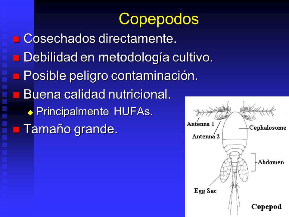 Copepodos Cosechados directamente. Debilidad en metodología cultivo.