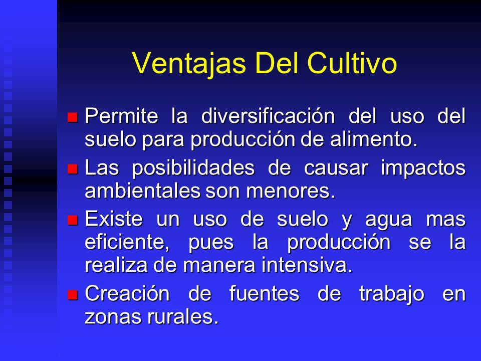 Ventajas Del Cultivo Permite la diversificación del uso del suelo para producción de alimento.