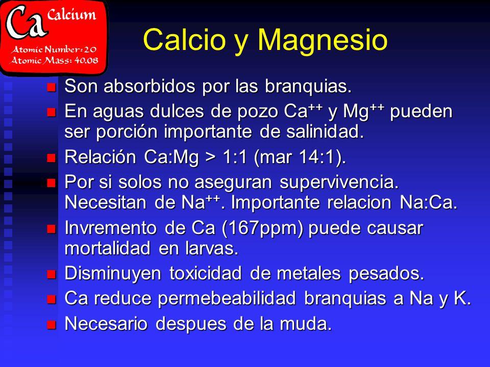 Calcio y Magnesio Son absorbidos por las branquias.